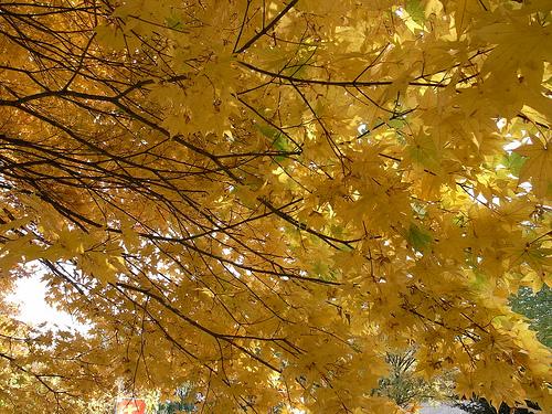 20091023_札幌