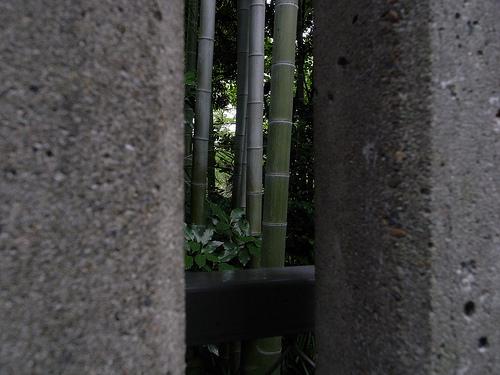 20090802_向島百花園1