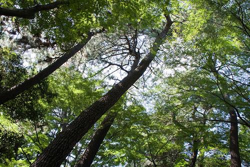 20090906_東京都庭園美術館2