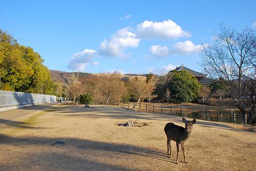 20100109_奈良