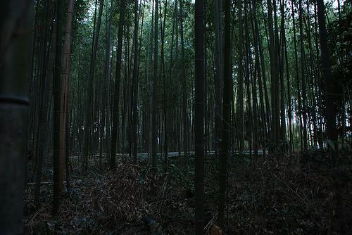 20100110_嵐山・嵯峨野