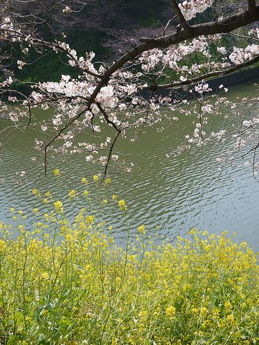 20100327_千鳥ヶ淵