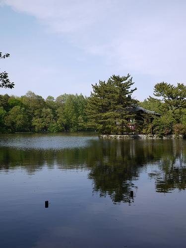 20100503_石神井公園