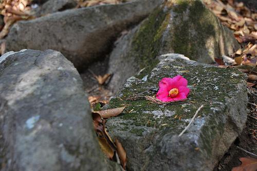 20100509_筑波山