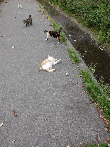 20100522_柴又~水元公園ポタ