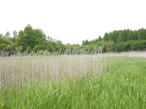 20100522柴又~水元公園ポタ