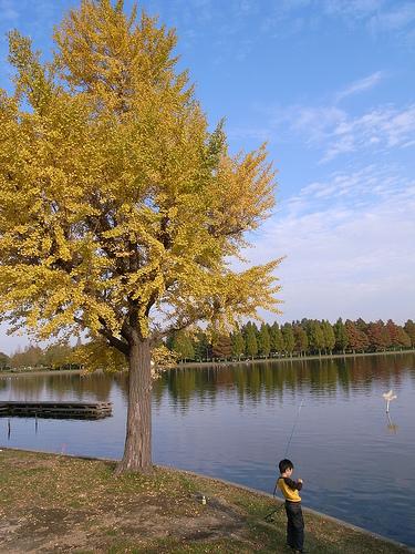 20101107_水元公園