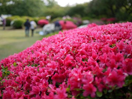 20110504_新宿御苑