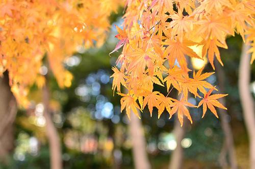 20121209_小石川後楽園