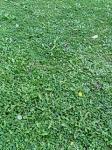 20051002_北大植物園の芝生